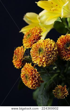 A photo of lilies and chrysanthemum flowers against black background. Chrysanthemums, sometimes called mums or chrysanths, are flowering plants of the genus Chrysanthemum in the family Asteraceae. Selective focus.