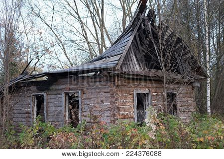 Old abandoned house autumn forest. Gloomy view of the empty abandoned house with a collapsed roof. Around autumn - fallen leaves, bare trees.
