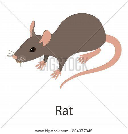 Rat icon. Isometric illustration of rat vector icon for web