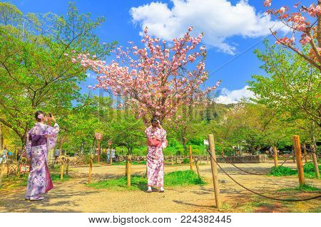 Kyoto, Japan - April 24, 2017: young Japanese women in kimono take picture of cherry blossom tree at Maruyama Park, the Kyoto's most famous cherry-blossom viewing hanami spot. Spring season.