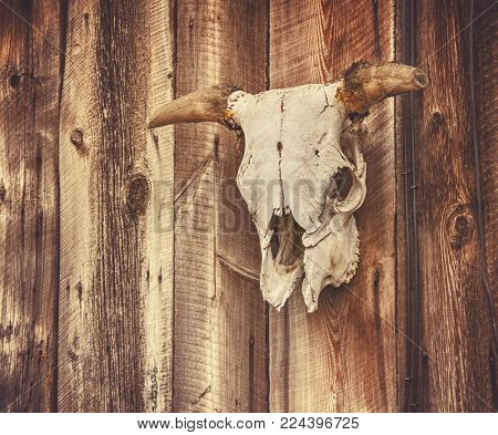 wall with a steer or cow skull and horns attached in some sort of ornamental decoration in a rural area toned with a retro vintage instagram filter