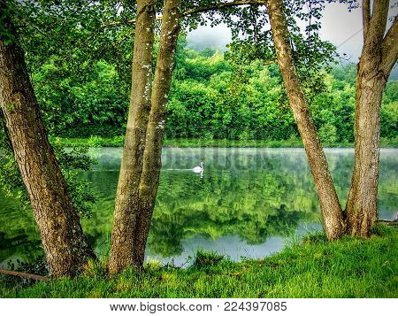 Swan On The Moselle River Reflecting Trees Of Water Sunset Near Toul France Campground With Mist On