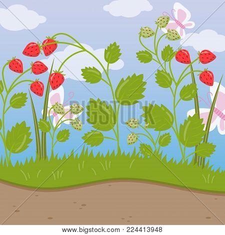Strawberry field, green background with ripe berries colorful vector illustration in cartoon style.