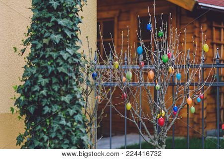 April, 17th, 2017 - Potsdam, Brandenburg, Germany. Traditional festive Easter tree decorated with eggs during Easter celebration in Potsdam. Selective focus image.