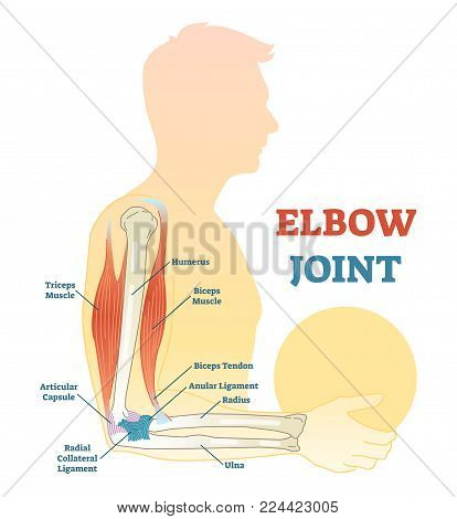 Elbow joint vector illustrated diagram, medical scheme. Educational sports injury information.