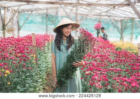 portrait of a young asian woman harvesting chamomile flowers