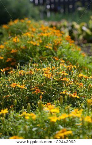 Garden Flowers Growing In The Flowerbed
