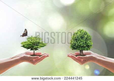 Environmental biodiversity in ecosystem concept with bio diversity in species of tree planting and saving biological life living in clean environment on volunteers hands