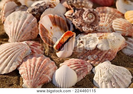 Seashells on the sand of a beach, seashell summer background