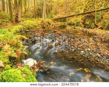 Autumn curved mountain stream on basalt rock.  Clear water makes white rapids between mossy boulders and bubbles create trails on level.