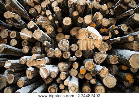 Abstract Wooden Logs Of Felling In Winter Forest.