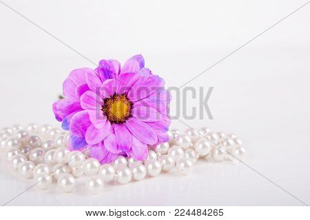 Closeup Purple Chrysanthemum Flower Lying On Pearl Necklace On White Wooden Background