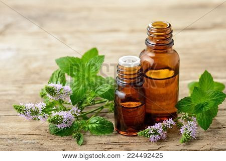 Peppermint essential oil and fresh peppermint flowers on the wooden board