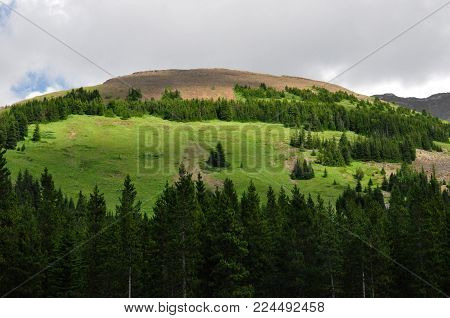 Lush Green Hill  with Pine Trees and cloudy skies