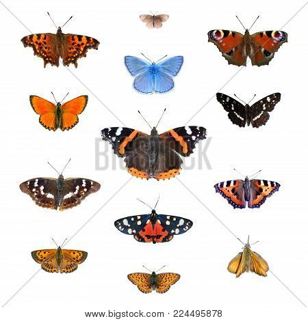 Big set of the European butterflies isolated on a white. Comma, Woodland ringlet, Peacock, Common blue, Scarce copper, Red admiral, Map, Purple amperor, Scarlet tiger, Small tortoiseshell