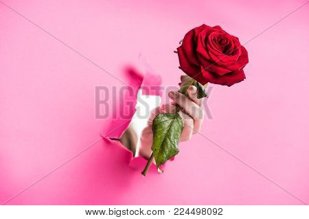 cropped image of woman holding red rose in hole in pink paper