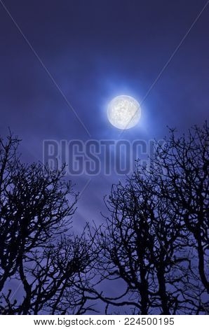 Full moon glowing in cloudy sky above silhouetted oak tree branches