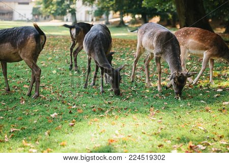 A group of young deer walks through a warm green sunny meadow next to the trees.
