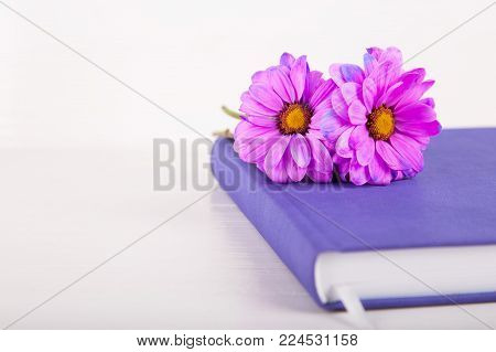 Two purple chrysanthemum flowers on violet closed notebook on white wooden background.