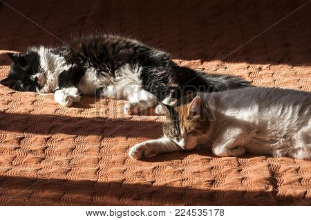 Two cats sleeping on home bed cover in sun shade