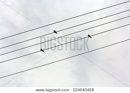 On the electric wires sit three swallows or canary on a background of gloomy gray sky. The wires are arranged on the diagonal of the frame. Picture resembles musical notation line. Like musical notes in a notebook. Wires resemble strings, and birds - note