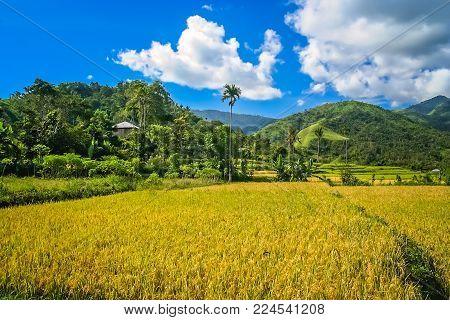 Dense tropical landscape of the Indonesian Flores Nusa Teggara island, Indonesia, Asia