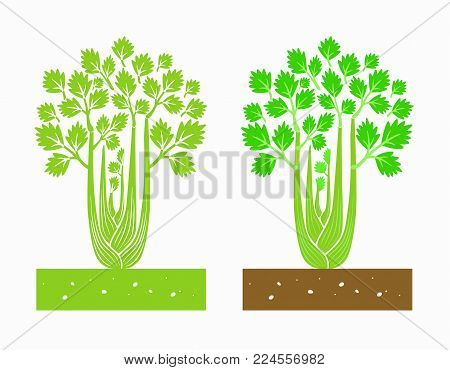 isolated celery plant with leaves vector illustration