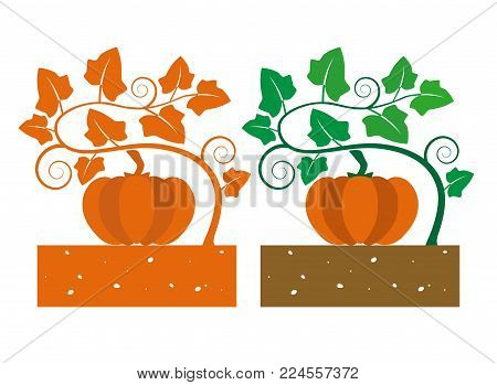 isolated pumpkin plant with product vector illustration
