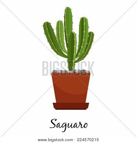 Saguaro cactus in pot isolated on the white background, vector illustration