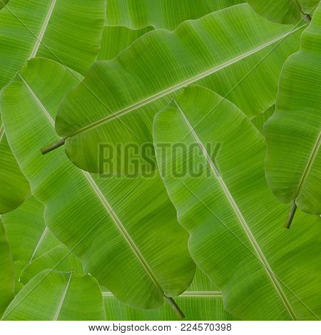 seamless pattern background of green banana leaf