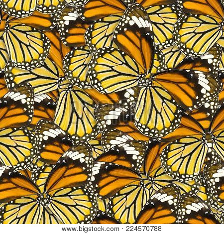 seamless pattern background of macro butterfly wing