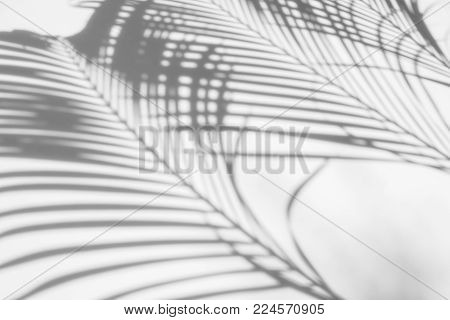 abstract background of shadows palm leaves on a white wall. White and Black.