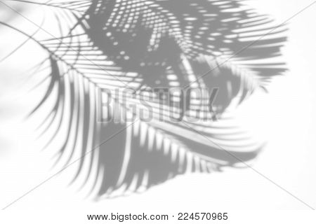 abstract of shadows palm leaves on a white background. White and Black.