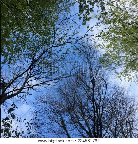 Trees grabbing space in the woodland to grow into blocking the blue cloudy sky