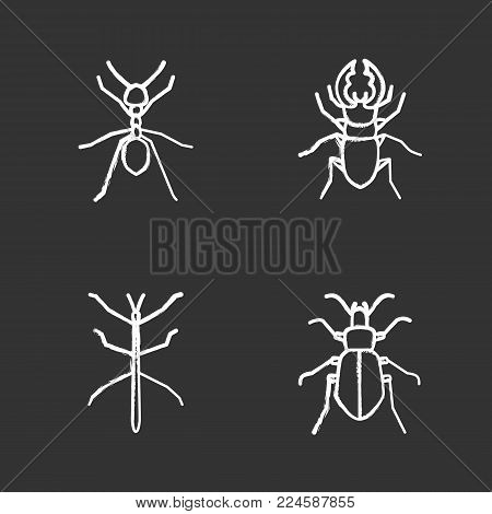 Insects chalk icons set. Ant, stag beetle, ground bug, phasmid. Isolated vector chalkboard illustrations