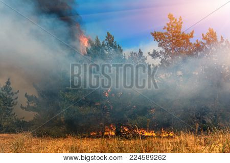 Forest fire. Burned trees after wildfire, pollution and a lot of smoke.