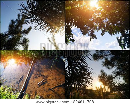 Sun light summer collage with sunrise and pine trees. Nature background for any art and design calendar and any objects. Sunlight weather wallpapers collage.