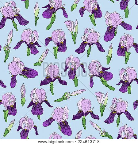 Vector graphic hand-drawn ink seamless pattern of purple iris flowers in a linear style. Vintage texture. Drawn on paper and traced buds of violet irises. For textile, fabric, invitation