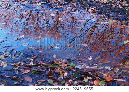 Colorful natural park reflections in Tokyo, Japan. The leaves have now fallen and the trees are bare. There's no doubt in the reflections, that winter is here.