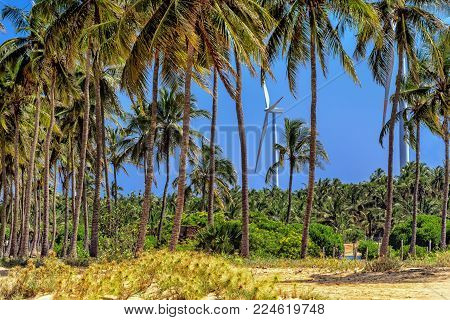 wind generators among palm trees in rural Sri Lanka. Alternative Renewable Energy Sources