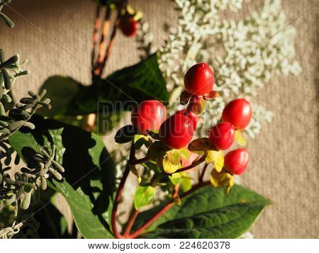 Japanese indoor berry bouquet. For something different rather than flowers this is a Japanese berry bouquet for display inside. Highlights the bright reds of the berry's with the white, green and yellow wild foliage to create a subtle and gentle balance