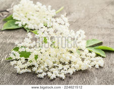 Elderberry flowers on the wooden background.