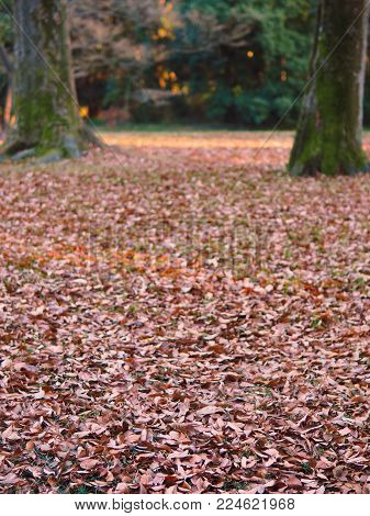 Dry forest ground with natural colors in portrait orientation. Dry leaves on grass for use as a winter, autumn fall park or nature forest background. Focus is on the foreground, background is bokeh in case of use with text or design. In landscape orientat