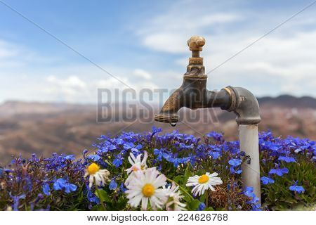 Blue flowers and chamomiles with faucet and blurry mountains in the background. Stock photo