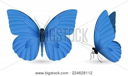 Set of blue butterflies isolated on a white background. Appias nero butterfly. Realistic 3D illustration