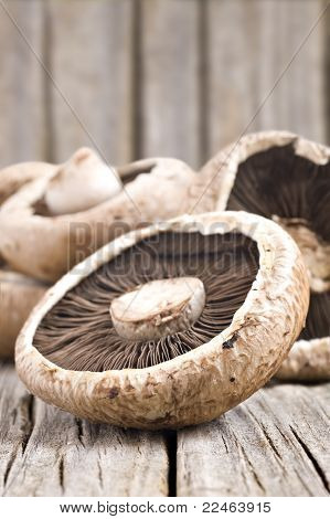Healthy Fresh Mushrooms With Very Shallow Depth Of Field