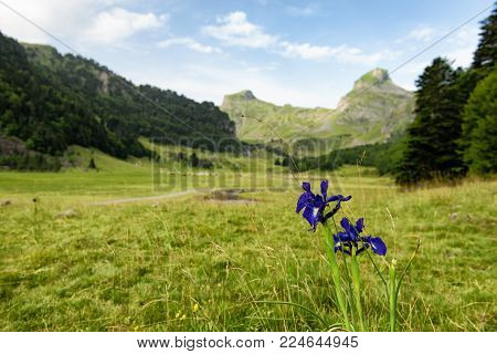 a view of the french Pyrenees mountains with flowers