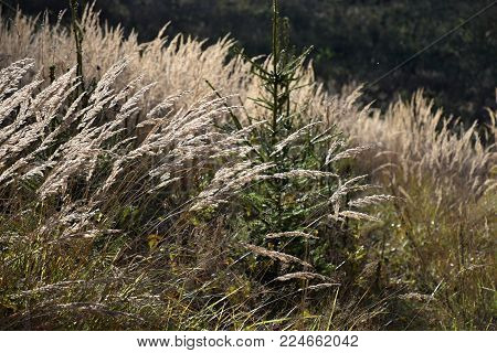 Stalks of tall grass in the forest