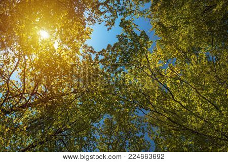 Low angle view of treetops in forest in summer with sunlight beaming through branches and leaves
