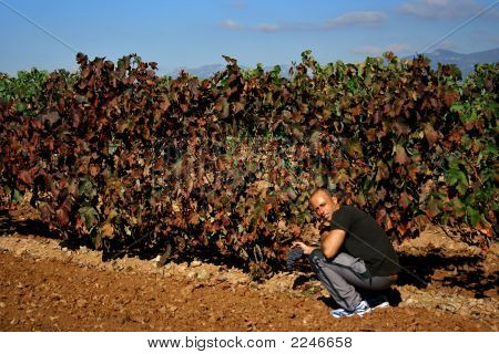 Vineyards Farmer